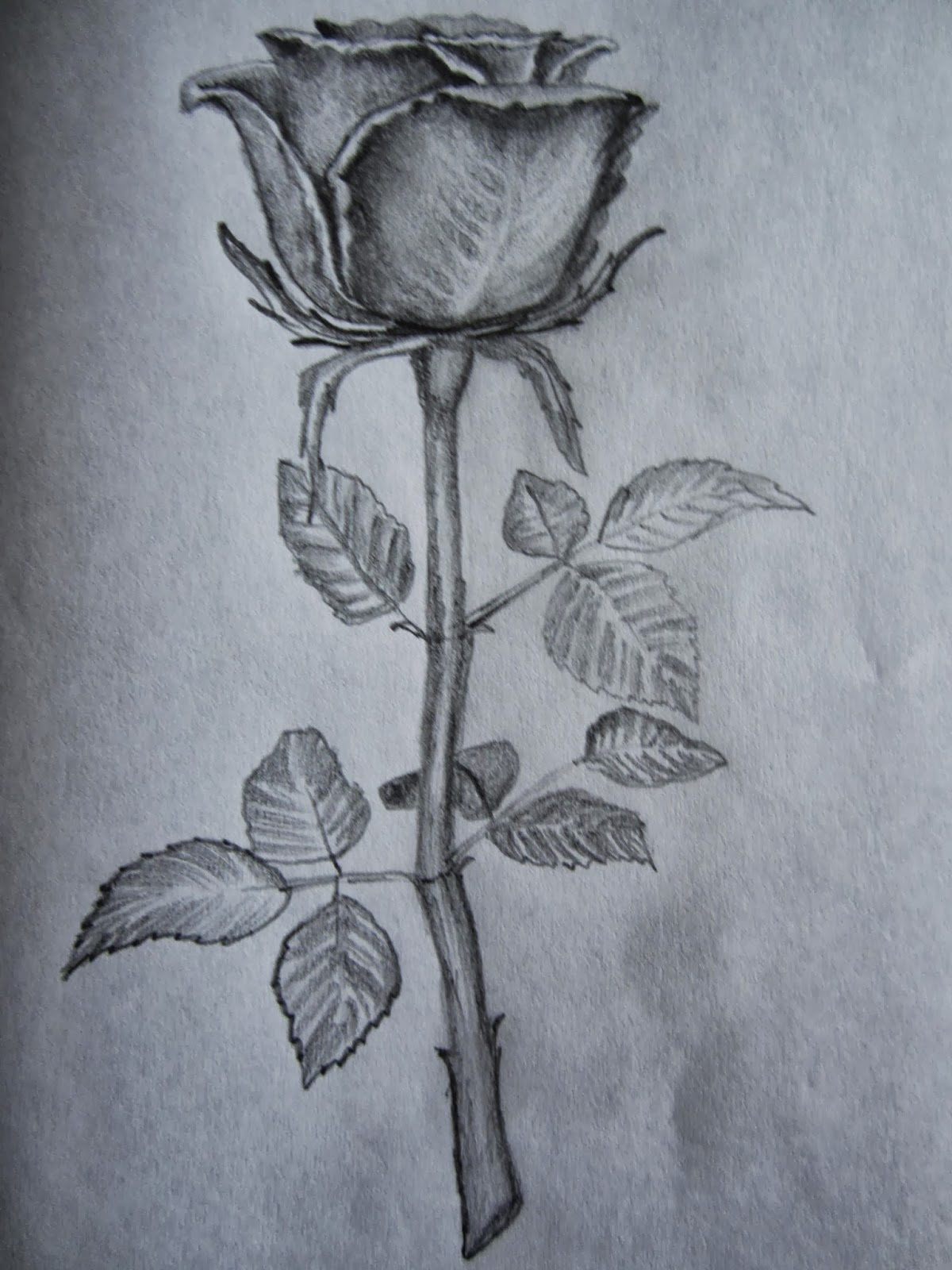 Rose Drawings In Pencil Outline