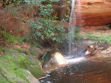 Natureza Pernambucana