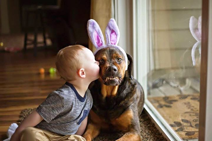 L'enfant et le chien: morsures Coeur%2Bd'Alene%2BPress%2Bbaby%2Bkissing%2Bdog