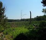 Stiling Bog