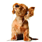 . of Amazing Music Dog Photo on this Dogs Wallpapers Backgrounds website
