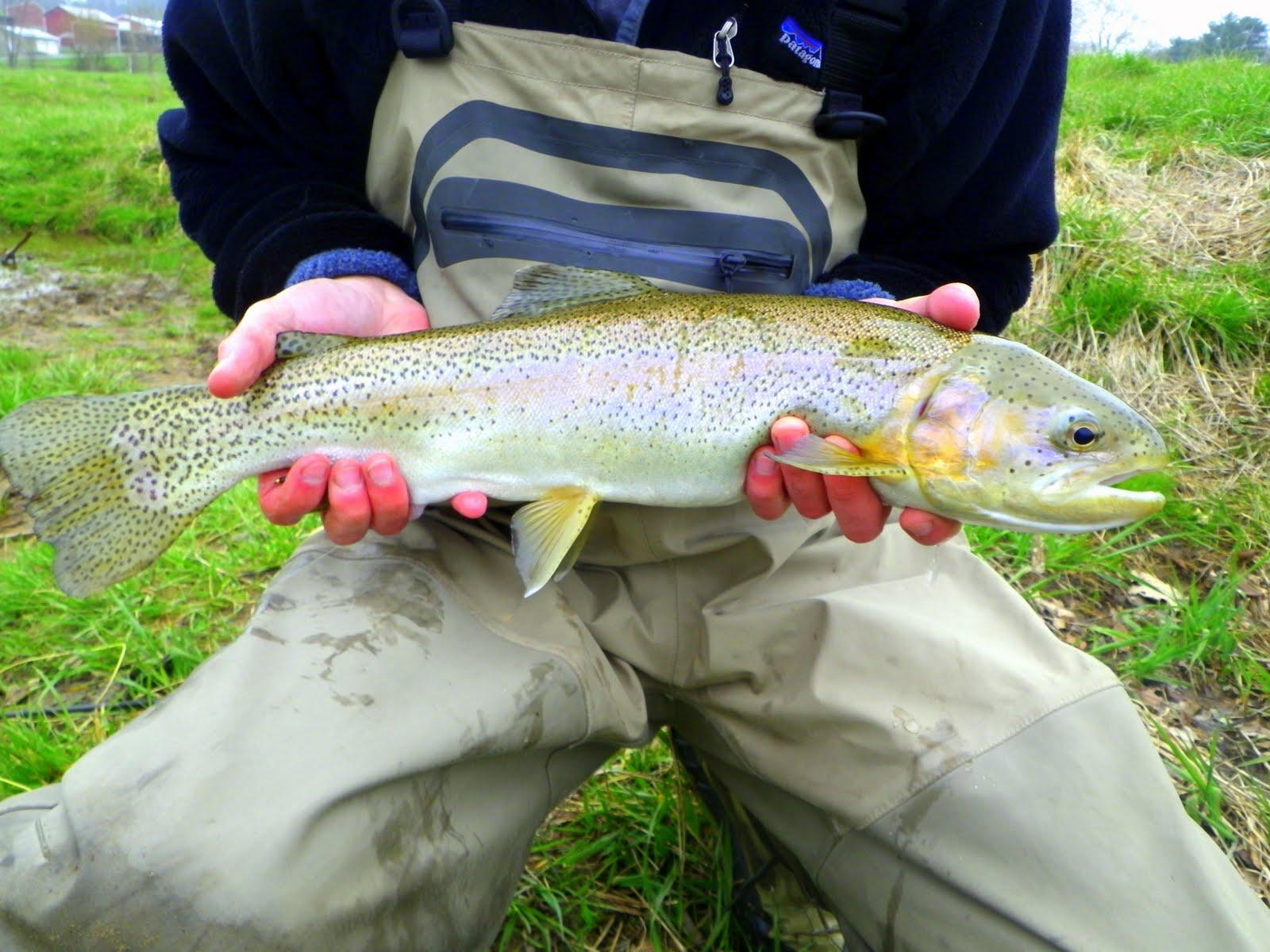 Virginia medical fly fishing april 2011 for Beaver creek fly fishing