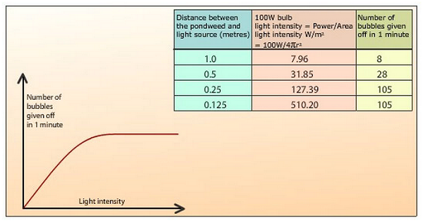 the effect of light intensity on the rate of photosynthesis essay At low light intensities, the limiting factor governing the rate of photosynthesis is the light intensity as the light intensity increases so does the rate but at high light intensities one or more other factors must be limiting, such as temperature or carbon dioxide supply.