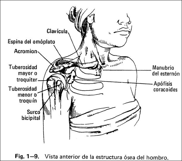 SEMIOLOGÍA OSTEOARTICULAR: ARTICULACIÓN DEL HOMBRO
