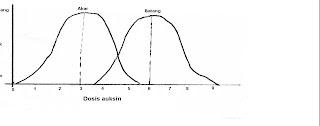 Grafik efek konsentrasi auksin yang berbeda pada akar dan batang