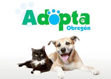 Adopta una mascota