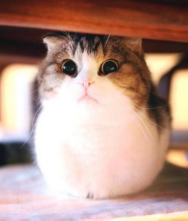 Коты. самые милые