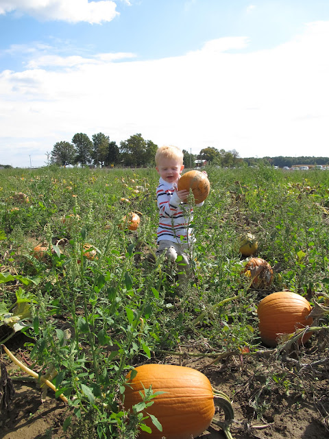 Porter the Pumpkin Picker