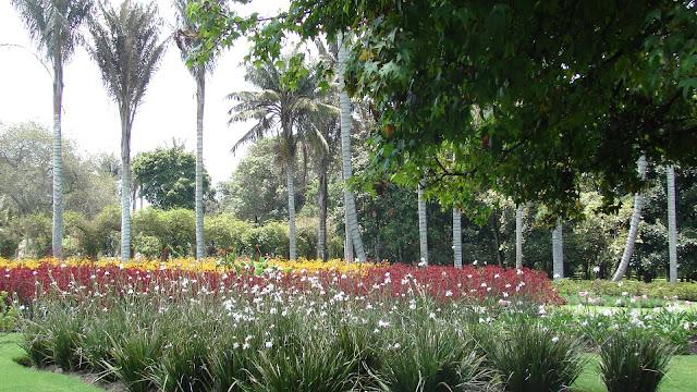 paisajismo, pueblos y jardines: el jardín botánico josé celestino