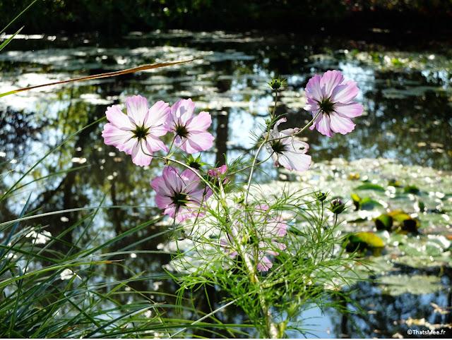 Fleur Des Jardins d'Eau de la Fondation Monet Giverny impressionnistes peintre France