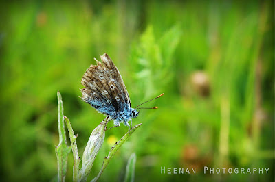 """Feeling Blue"" by Heenan Photography"