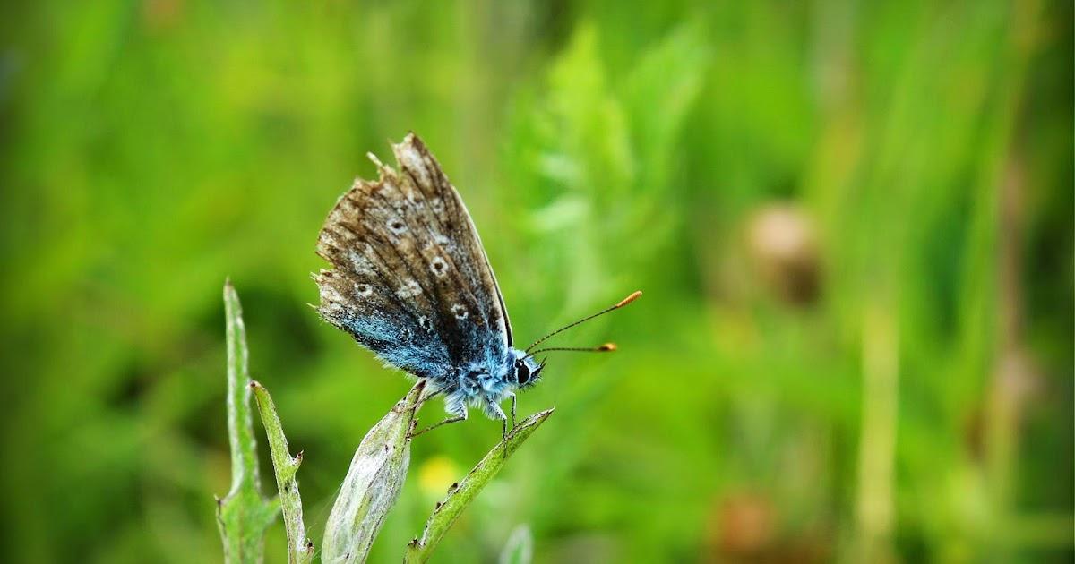 Langdon Hills: Feeling Blue