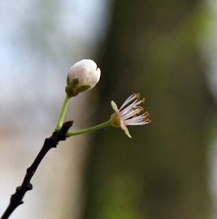 Umutlarimin ilkbahar selisin