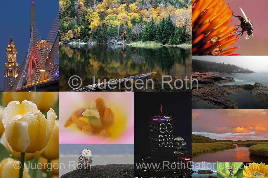 www.rothgalleries.com
