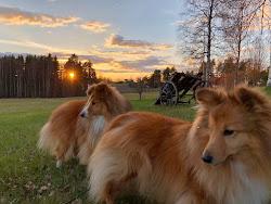 Solnedgång i Enviken maj-18