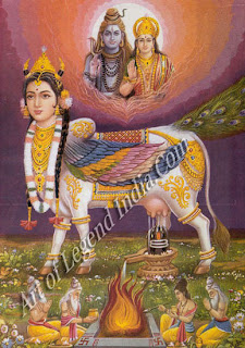 Kamadhenu, the wish-fulfilling cow, a manifestation of the goddess Lakshmi