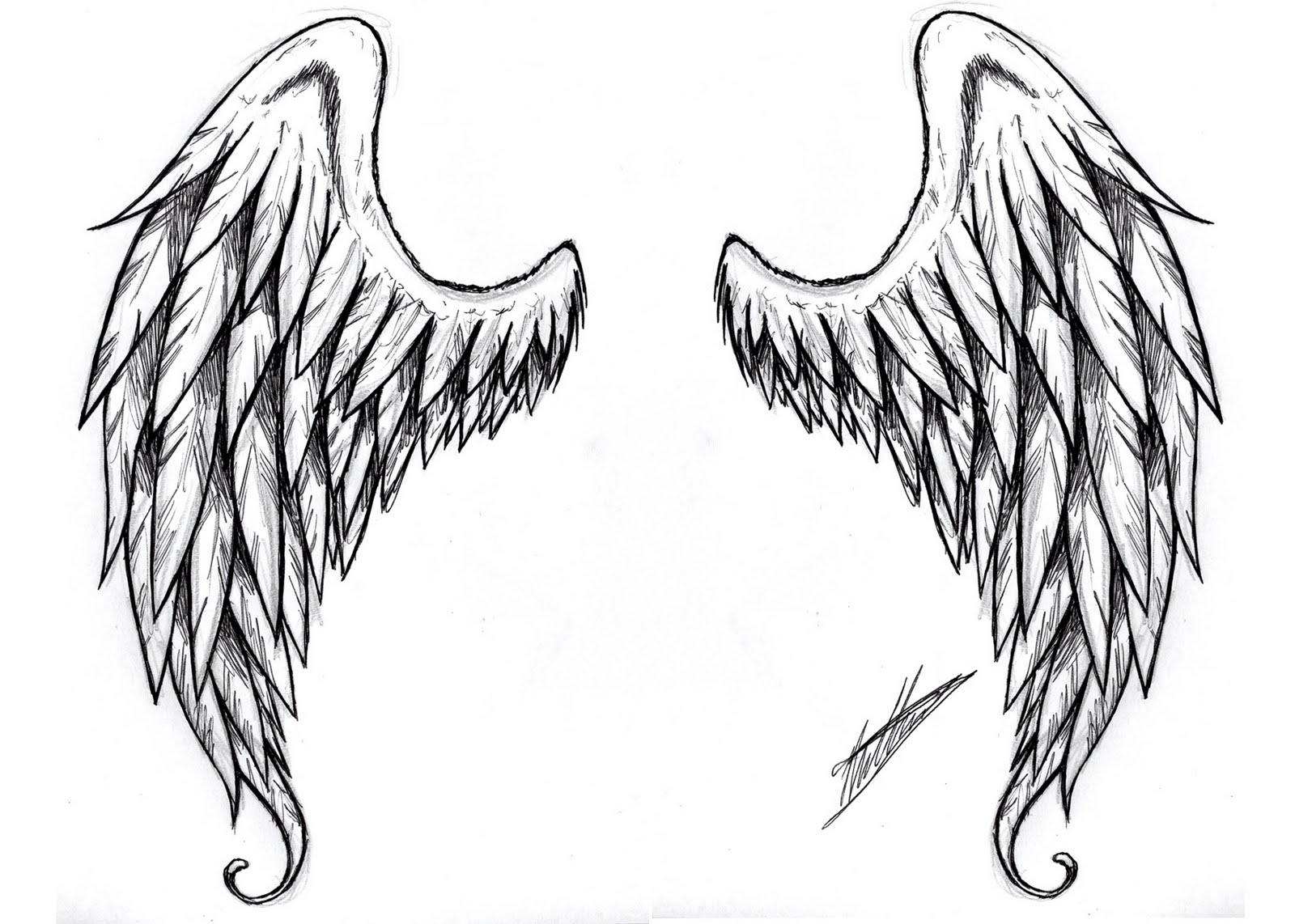 Beautiful angel wings |The Free Images