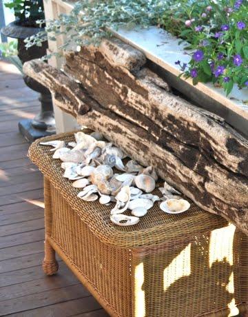 seashells – temple illuminatus