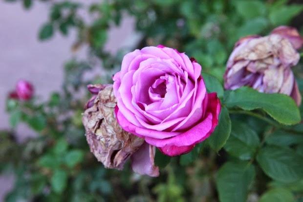 Photography Tanvii.com