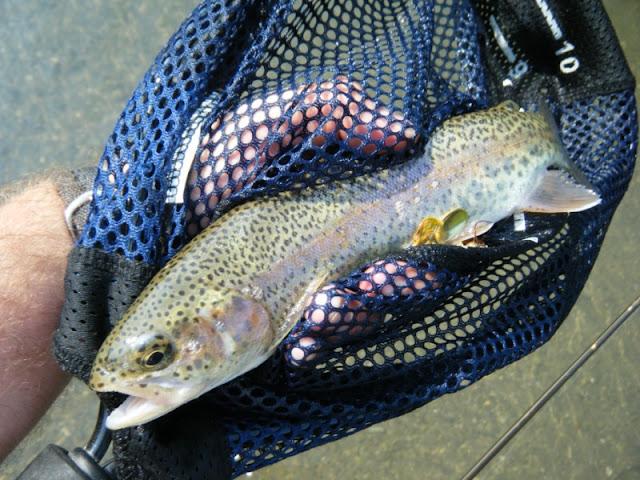 Quittie Creek PA Rainbow Trout