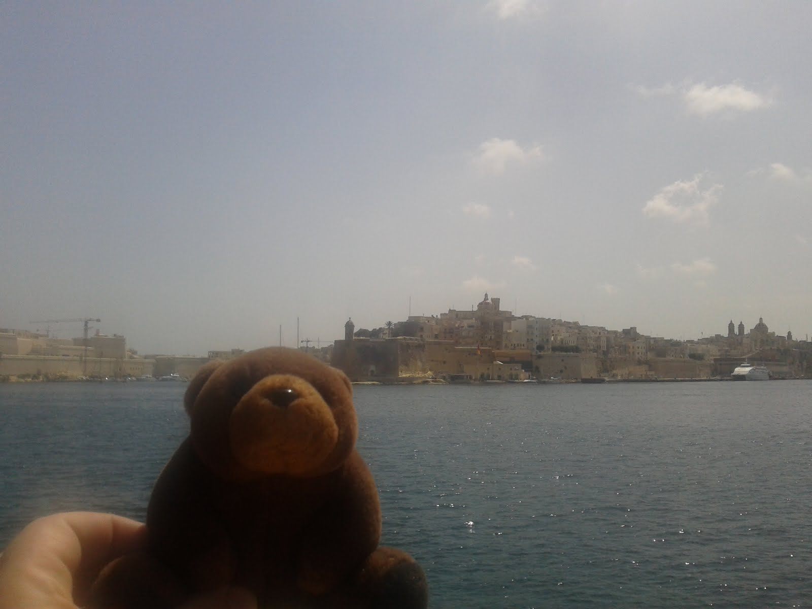 Teddy Bear in Malta