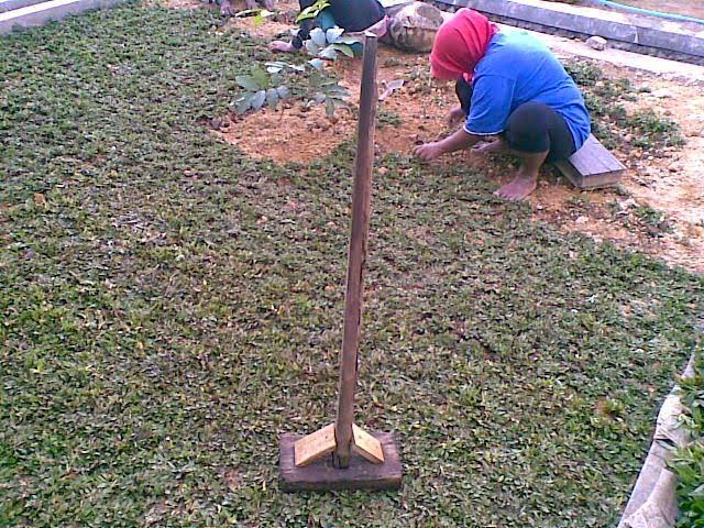 Tukang rumput taman | gajah mini | gajah cikande | jasa penanaman rumput dan pembuatan taman | supplier tanaman hias dan rumput
