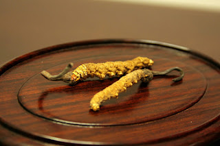Cordyceps sinensis is very expensive.