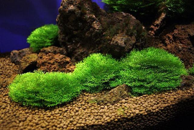 http://www.thisday.in.ua/2015/12/richchija-v-akvariume.html