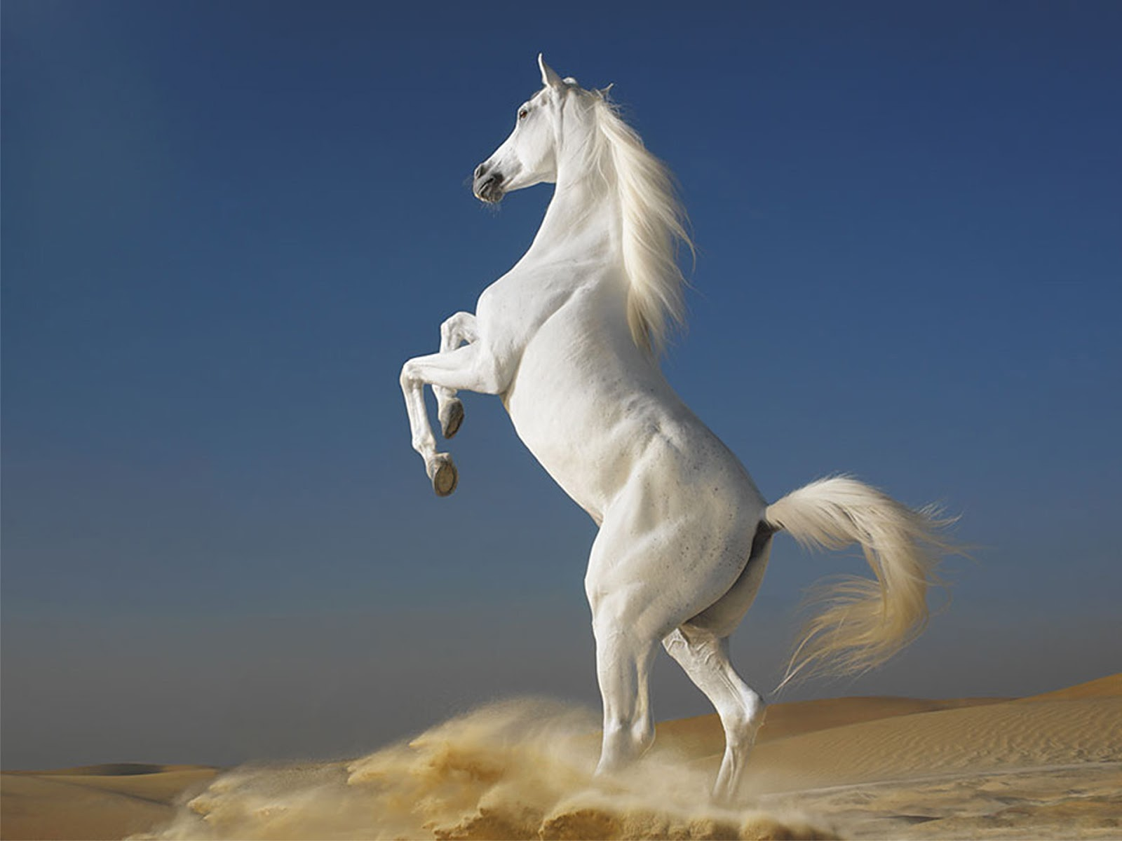 Wallpapers Fair: The Attractive High Quality Free Animals Horses ...