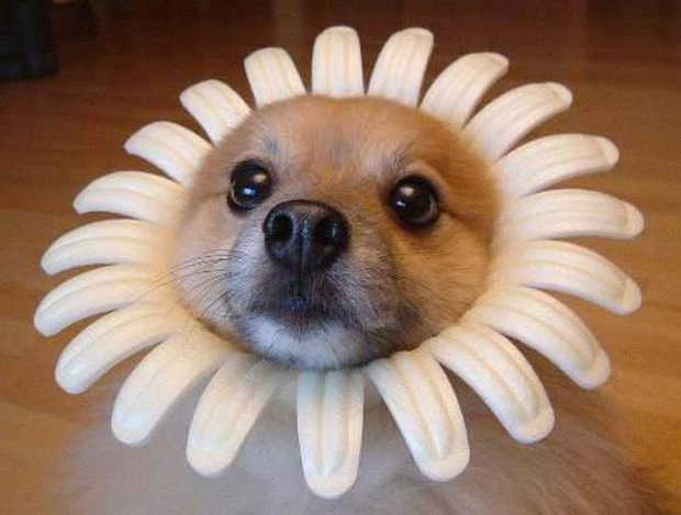 Cute dogs - part 97, cute dog photos, funny dog pictures