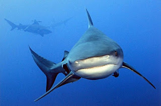 sharks-Pictures-Photos-Images-Pics