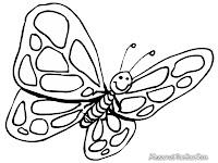 Kupu - kupu serangga bersayap indah
