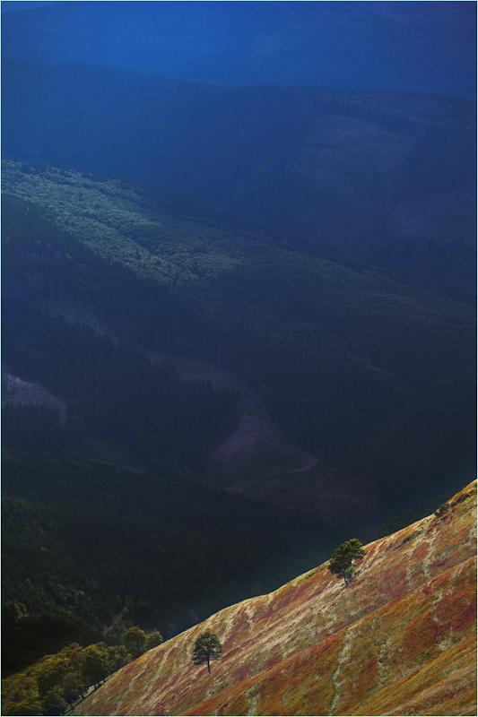 czlowiek swiatloczuly swidowiec magiczny