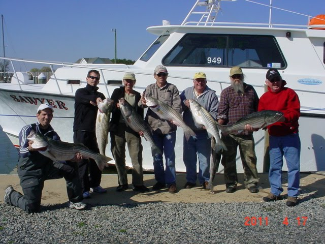 Saltwater report chesapeake bay fishing for Chesapeake fishing report