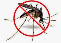 recette a base d'huiles essentielles anti-moustique