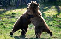 Momento Felicidade entre ursos