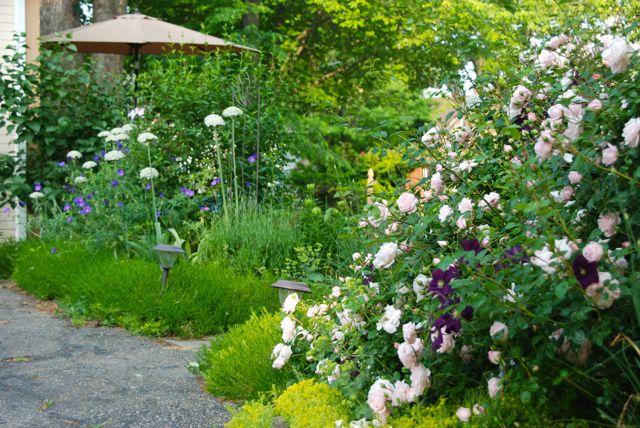 The Driveway Garden at Gilmore Gardens