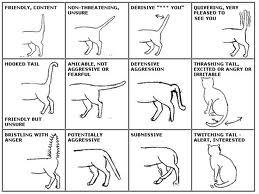 Komunikasi Dengan Kucing Anda Dudi Cats