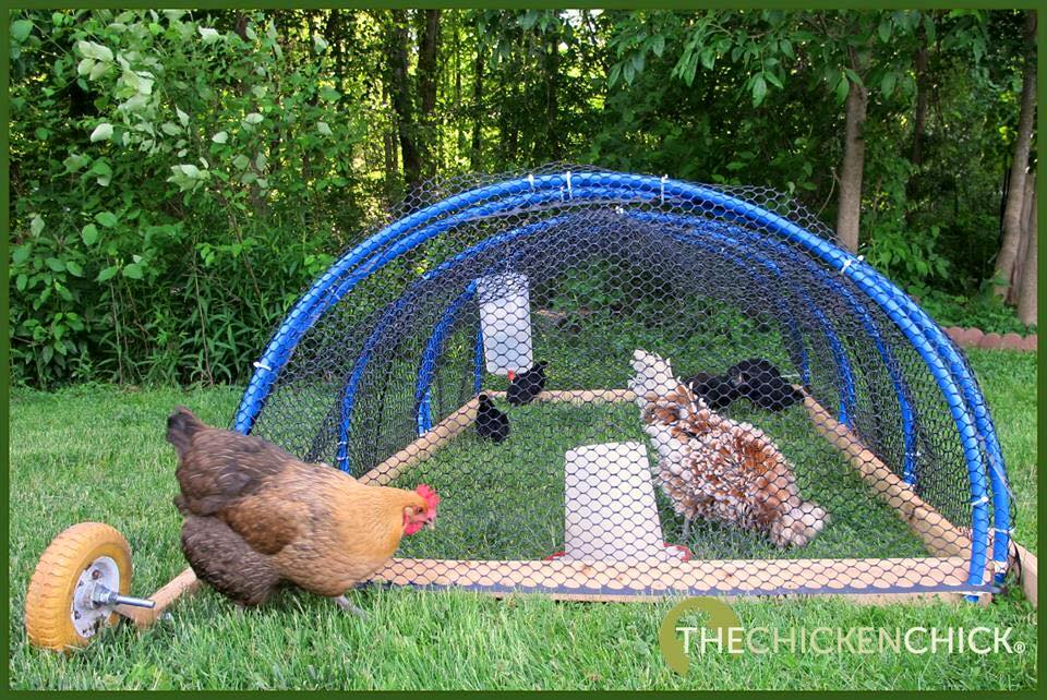 The Chicken Chick