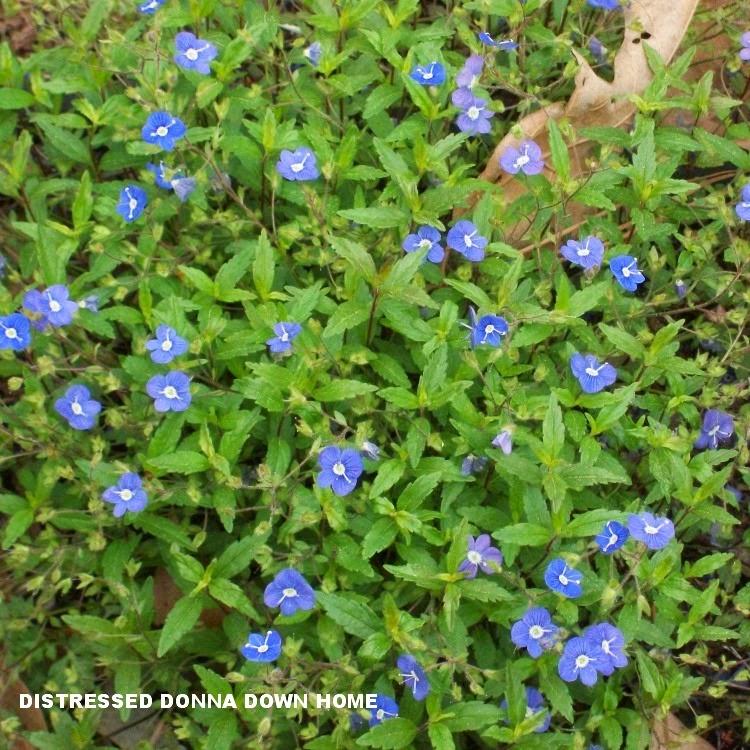 gardening, spring, azaleas, blooming flowers