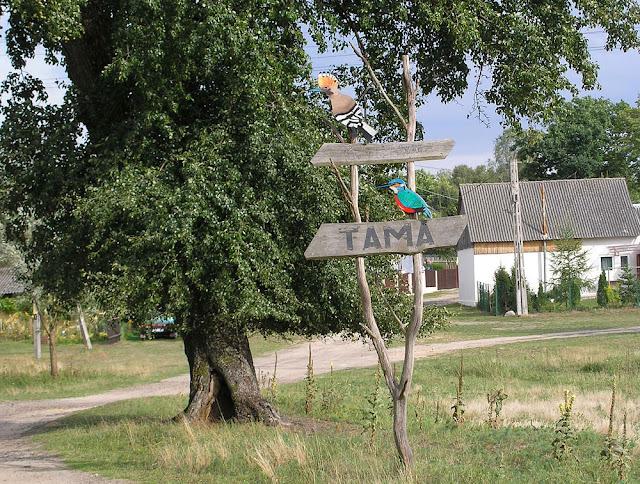 Tama – miejscowość położona w powiecie koneckim, w gminie Ruda Maleniecka. W latach 1975-1998 administracyjnie należała do województwa kieleckiego. Fot. Dariusz Jaskulski