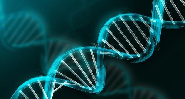 Cientistas criam organismo com DNA de 6 letras