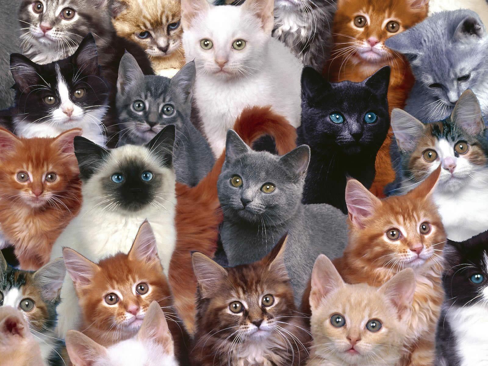 rosen-so-rot Cat desktop wallpaper