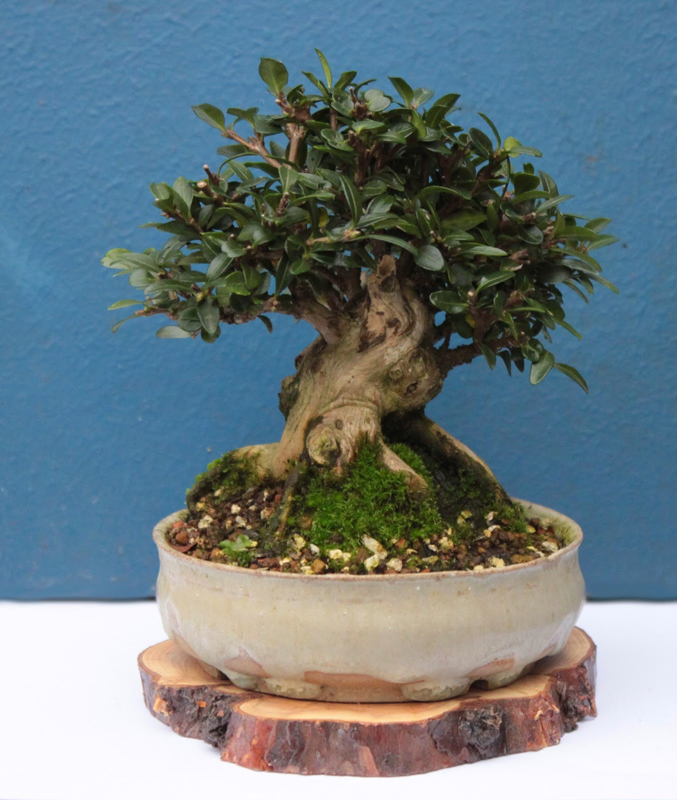 Yamadori Art UK Ostranica Bonsai Pots
