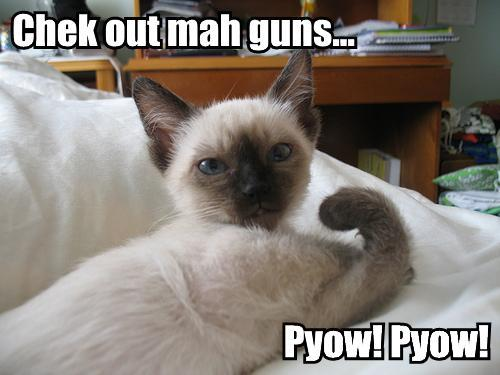 Funny Cat With Machine Gun