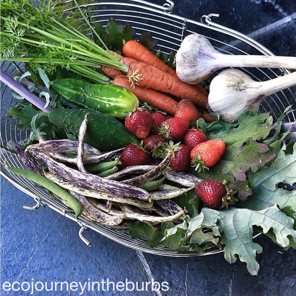 Eco Journey In The Burbs Diy Celery: Eco Journey In The Burbs: Summer Garden Roundup