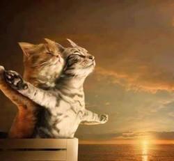 Kucing Titanic