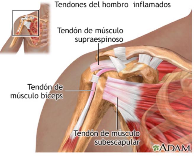 Anatomía Aplicada: ejemplos músculos profundos