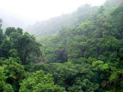 map of brazilian rainforest. map of razilian rainforest.