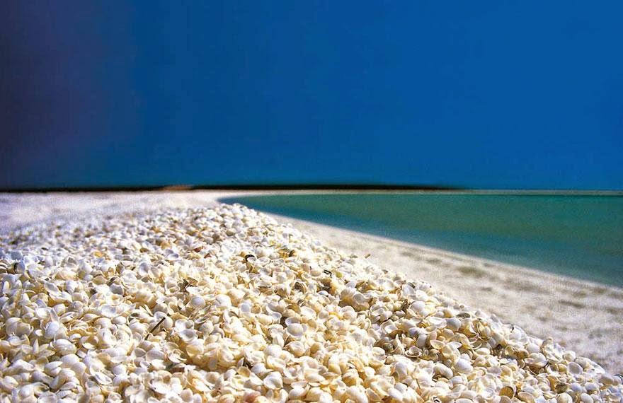 Suelo de conchas, Bahía Tiburón (Australia)
